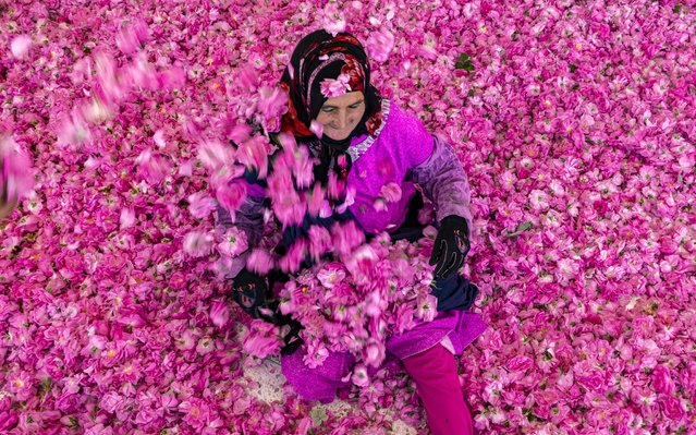 A worker spreads rose petals outside a house in the city of Kelaat Mgouna (or Tighremt NImgunen) in Morocco's central Tinghir Province in the Atlas Mountains on April 26, 2021. The heady aroma of the Rosa Damascena, a variety introduced in the days of the caravan trade, perfumes hedges and fields irrigated by two wadis between the Atlas Mountains and the Sahara Desert. Everything revolves around roses: the names of hotels, colour of cabs, cosmetics sold in countless stores, necklaces offered by children in the streets, the monument standing the town of Kelaat Mgouna and its annual festival that attracted thousands of visitors before COVID-19. (Photo by Fadel Senna/AFP Photo)