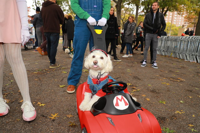 A dog in a Super Mario costume is seen during the 28th Annual Tompkins Square Halloween Dog Parade at East River Park Amphitheater in New York on October 28, 2018. (Photo by Gordon Donovan/Yahoo News)