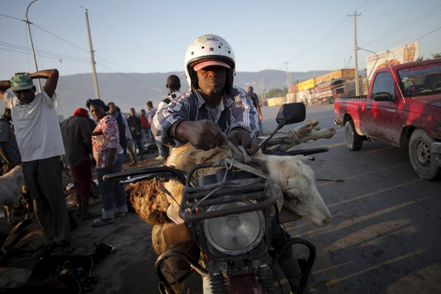 A man ties animals on his motorbike to transport them at La Saline slaughterhouse in Port-au-Prince, Haiti, April 4, 2015. (Photo by Andres Martinez Casares/Reuters)