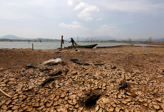 A fisherman walks to the waters edge in Jatigede Reservoir during the dry season in Sumedang, West Java, Indonesia, September 15, 2018. (Photo by Willy Kurniawan/Reuters)