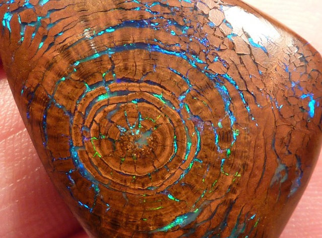 Rare Opalized Wood Metallic Greens