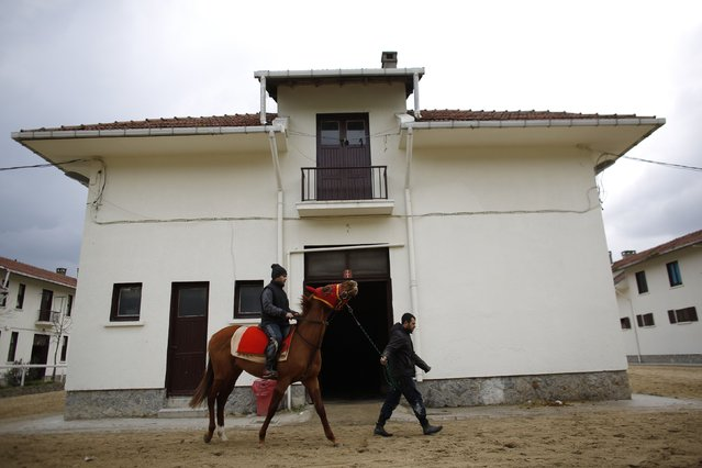 A racehorse is led through the Veliefendi equine hospital compound in Istanbul March 20, 2015. A state-of-the-art hospital for hundreds of horses run by the Jockey Club of Turkey at Istanbul's Veliefendi racecourse is the country's oldest and biggest. (Photo by Murad Sezer/Reuters)