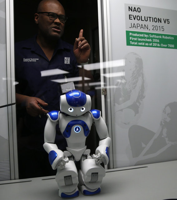 A technician adjusts Nao Evolution robot from Japan, during a press preview for the Robots exhibition held at the Science Museum in London, Tuesday, February 7, 2017. (Photo by Alastair Grant/AP Photo)