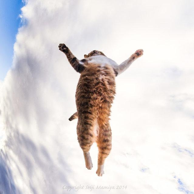 Cats By Seiji Mamiya