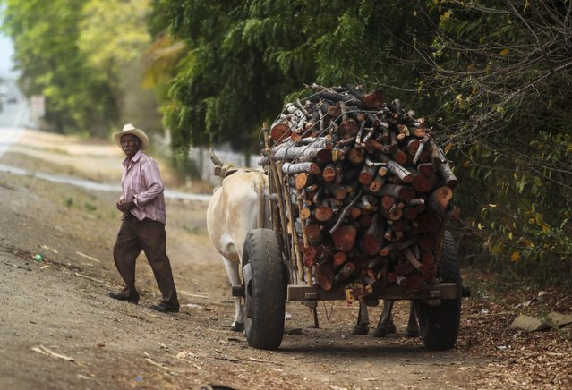 A man transports  logs on his bull-cart to make charcoal at La Campanera village, Nicaragua, May 22, 2015. Around 300 families live off the sale of charcoal in this area located in the dry corridor of Nicaragua. Friday marks World Environment Day. Picture taken May 22, 2015. REUTERS/Oswaldo Rivas