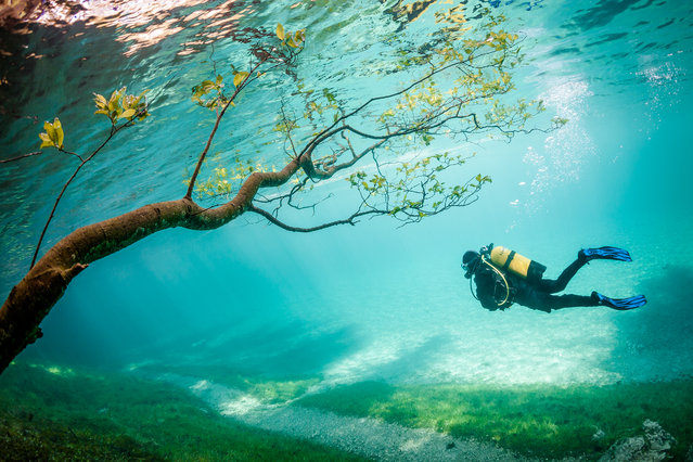 """Diver in Magic Kingdom"". Green Lake (Grüner See) is located Tragöss Austria. In spring snowmelt raises the lake level about 10 meters. This phenomenon, which lasts only a few weeks covering the hiking trails, meadows, trees. The result is magical to watch diving landscapes. Photo location: Grüner See at Tragöss, Austria. (Photo and caption by Marc Henauer/National Geographic Photo Contest)"