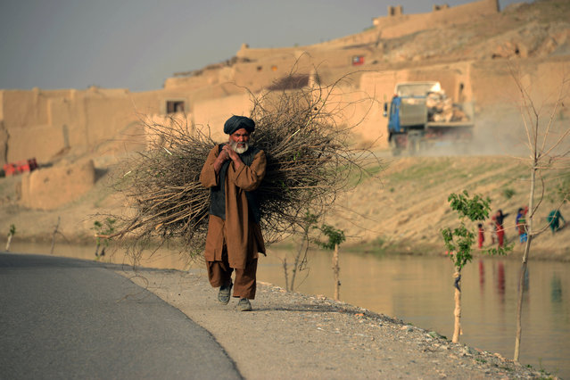 An Afghan man carries firewood along a road in Kandahar on June 1, 2016. (Photo by Jawed Tanveer/AFP Photo)