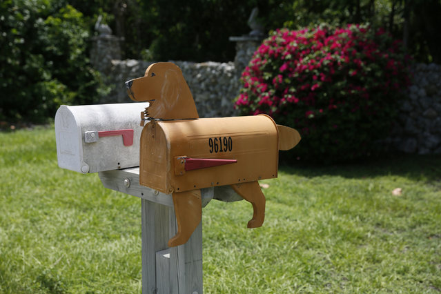 A mailbox in the shape of a dog is seen along the highway US-1 in the Lower Keys near Key Largo in Florida, July 10, 2014. (Photo by Wolfgang Rattay/Reuters)