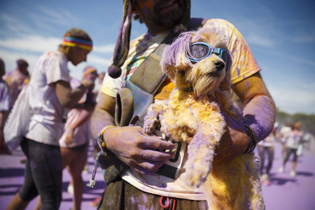 A participant holds his dog as colored powder is thrown into the air during the Color Run in Lausanne, Switzerland, 12 September 2015. The international 5km running event is inspired by the Hindu Holi spring festival of colors. (Photo by Valentin Flauraud/EPA)