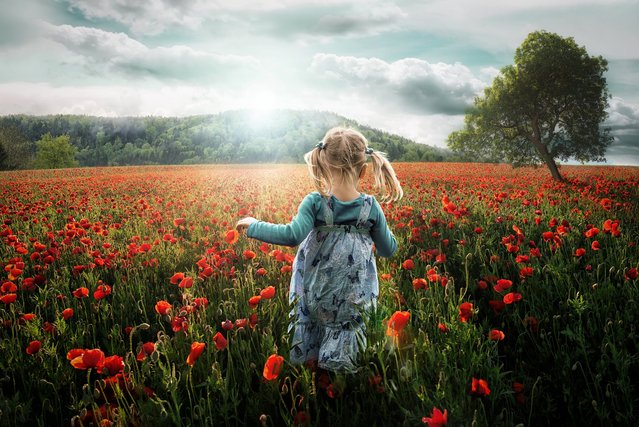 """Into the Poppies"". (John Wilhelm)"