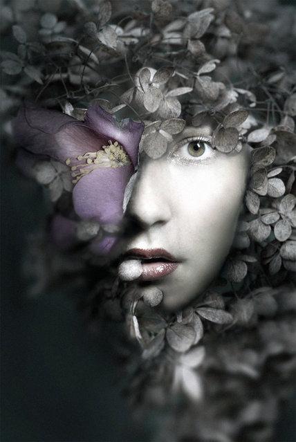 """""""The Frail with Dihaze"""". (Federico Bebber)"""