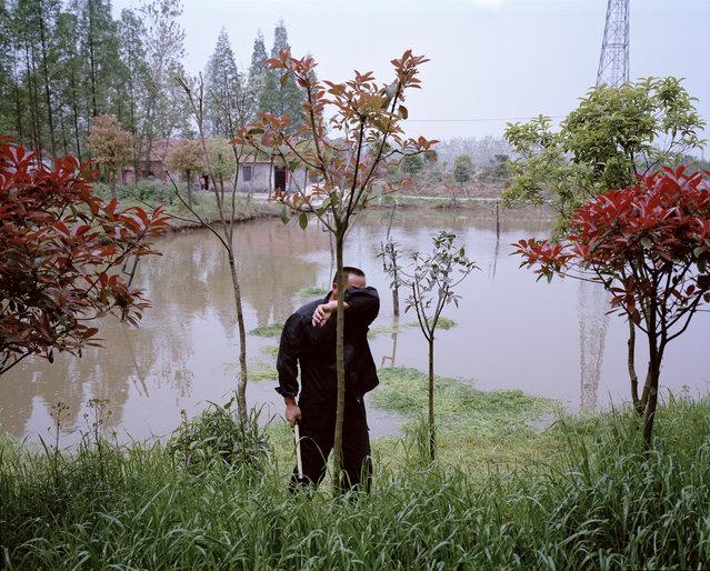 A fish farmer cuts grass to feed carp Hongxianxi Sustainable Fishery, Hubei Province, China, 2015. (Photo by Mustafah Abdulaziz/WWF-UK)
