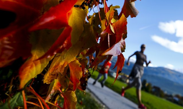 Autumn coloured leaves are pictured on a sunny autumn day in the western Austrian village of Gnadenwald, Austria October 27, 2015. (Photo by Dominic Ebenbichler/Reuters)