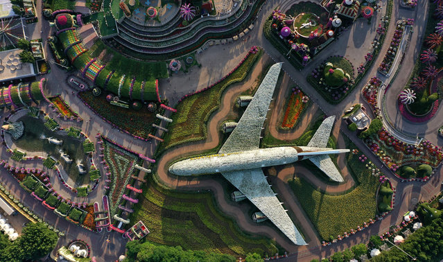 An aerial view shows a structure made of flowers of an Emirates Airlines Airbus A380 that made it to the Guinness Book of World Records, at the Dubai Miracle Garden, the world's largest flower garden, in the United Arab Emirates, on November 11, 2020. The Miracle Garden, home to giant floral structures and millions of flower and plant varieties, is open for visitors from November 1. (Photo by Giuseppe Cacace/AFP Photo)