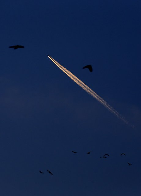 An airplane leaves vapour trails in the cold air as birds fly at dusk over Bucharest January 7, 2015. (Photo by Radu Sigheti/Reuters)