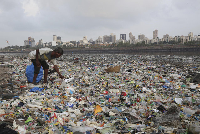 A man collects plastic and other recyclable material from the shores of the Arabian Sea, littered with plastic bags and other garbage, in Mumbai, India, Monday, June 4, 2018. (Photo by Rafiq Maqbool/AP Photo)