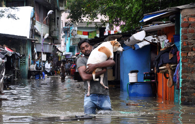A man carries a dog and wades through a flooded street in Chennai, in the southern Indian state of Tamil Nadu, Wednesday, December 2, 2015. Weeks of torrential rains have forced the airport in the state capital Chennai to close and have cut off several roads and highways, leaving tens of thousands of people stranded in their homes, government officials said Wednesday. (Photo by AP Photo)