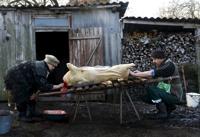 Belarussian villagers prepare to cook a pig after slaughtering it in the village of Azerany, Belarus, December 12, 2015. (Photo by Vasily Fedosenko/Reuters)