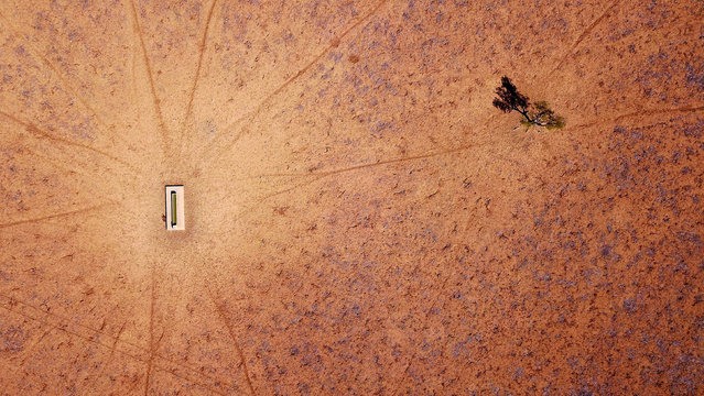 A lone tree stands near a water trough in a drought-effected paddock on Jimmie and May McKeown's property located on the outskirts of town of Walgett, in New South Wales, Australia, July 20, 2018. (Photo by David Gray/Reuters)