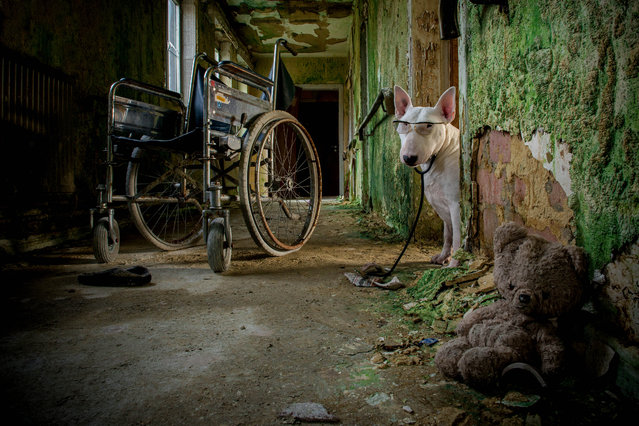 Claire in an abandoned nursing home in Belgium. (Photo by Alice van Kempen/Caters News)