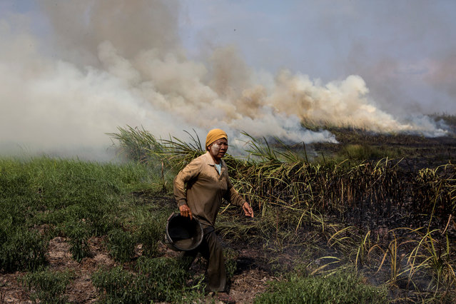 A local resident tries to extinguish a fire burning in Ogan Ilir, near Palembang, South Sumatra, Indonesia on September 17, 2018. (Photo by Nova Wahyudi/Antara Foto via Reuters)