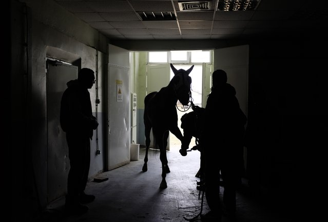 A racehorse stands before being X-rayed at Veliefendi equine hospital in Istanbul March 20, 2015. (Photo by Murad Sezer/Reuters)
