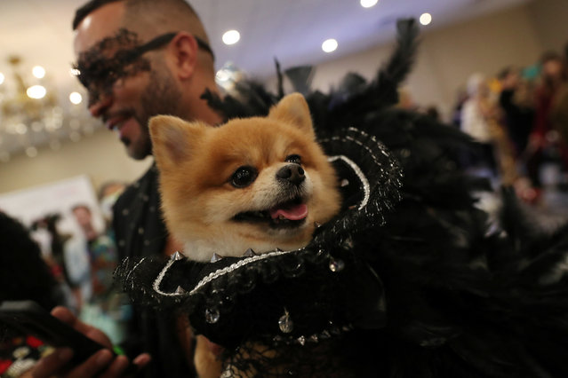 A man holds a dog backstage at the 16th annual New York Pet fashion show in New York, U.S., February 7, 2019. (Photo by Shannon Stapleton/Reuters)