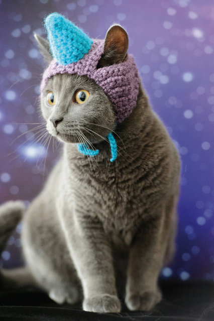 "This photo provided by Running Press and Quarto, Inc. shows Unicorn from the book, ""Cats in Hats"", published by Running Press. (Photo by Liz Coleman/Running Press/Quarto, Inc. via AP Photo)"