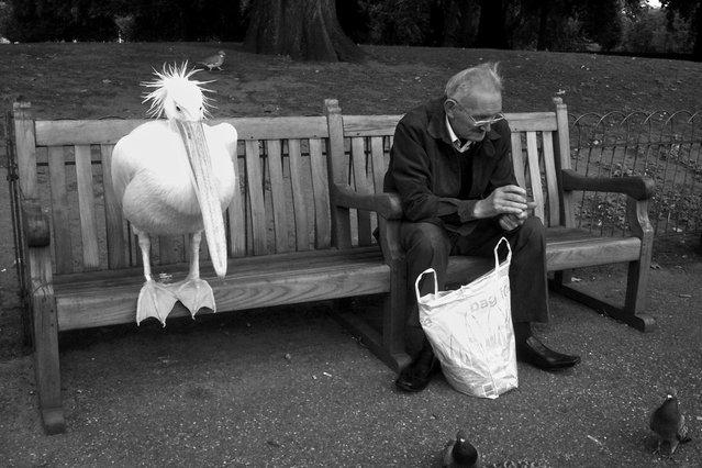 """""""Pelican"""". (Photo by Andrew Watt)"""