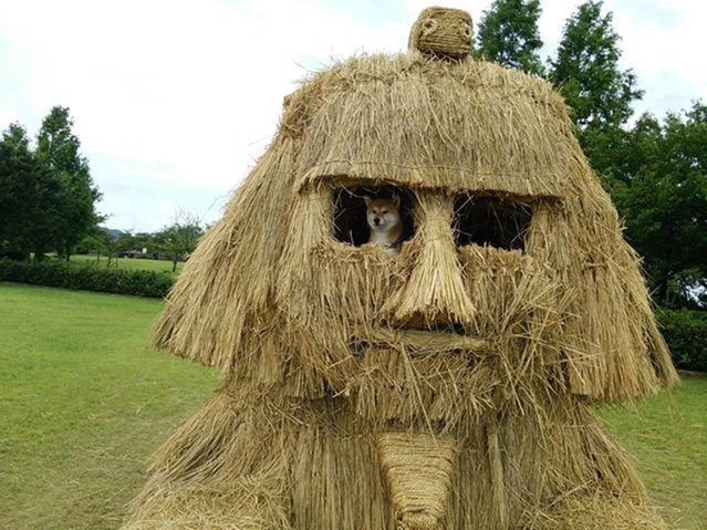 Straw Sculptures In Japan