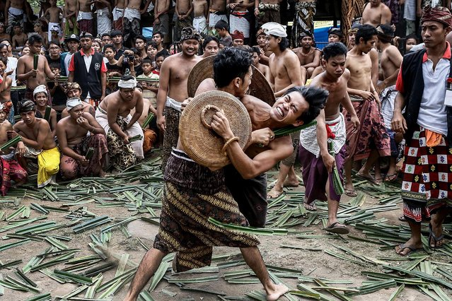 """Two men fight using thorny pandanus leaves in Tenganan Pagringsingan Village, Karangasem, Bali, Indonesia, on June 13, 2014. Every year Tengananese people in Bali celebrate a month-full ceremony called """"Usabha Sambah"""", to demonstrate respect to the God Indra, the Hindu god of war. One of the rituals during the ceremony is the Pandanus War or """"Mekare Kare"""", where two men duel using thorny pandanus as their weapons. (Photo by Putu Sayoga/Getty Images)"""