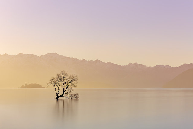 """Alone"". ""That tree"" – stands proud in Lake Wanaka, Otago, New Zealand – put on quite a display for us one evening as the fog hung over the lake just before sunset. The rolling hills and snow covering providing a perfect backdrop for the frequent resting place of the birds from the area. Photo location: Wanaka, New Zealand. (Photo and caption by Paul Reiffer/National Geographic Photo Contest)"