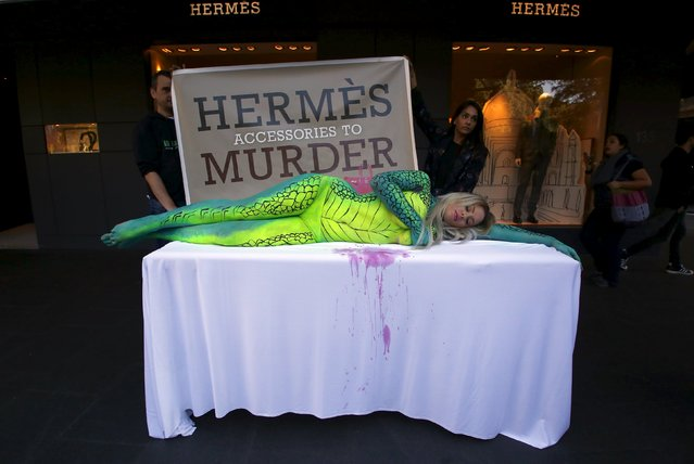 Australian model Rochelle Relf, painted as a crocodile, lies on a table during a protest against the use of crocodile skins, outside luxury product store Hermes in central Sydney, Australia, August 11, 2015. Animal rights organisation People for the Ethical Treatment of Animals (PETA) held the protest claiming that Hermes uses crocodile skins for some of their products from suppliers that harm the reptiles. (Photo by David Gray/Reuters)