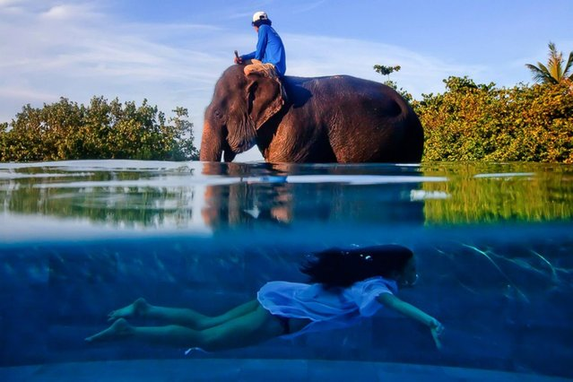 Phuket, Thailand. The girl is in the pool, which is higher than the land, and the elephant is on the land behind the pool. The photographer used an underwater bag to get a half submerged image. (Photo by Justin Mott)