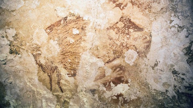 """A Babirusa (""""pig-deer"""") and a hand stencil are pictured in this undated handout image provided by Kinez Riza. Prehistoric paintings at least 40,000 years old that depict animals – including one known as a """"pig-deer"""" – and the outline of human hands in seven caves on the Indonesian island of Sulawesi are rewriting the history of art. Scientists said on October 8, 2014, they used a highly precise method to determine the antiquity of the paintings. (Photo by Kinez Riza/Reuters)"""