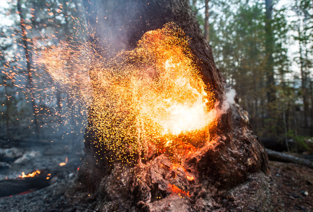 A forest fire in central Yakutia (Sakha Republic), Russia on June 2, 2020. (Photo by Yevgeny Sofroneyev/TASS)