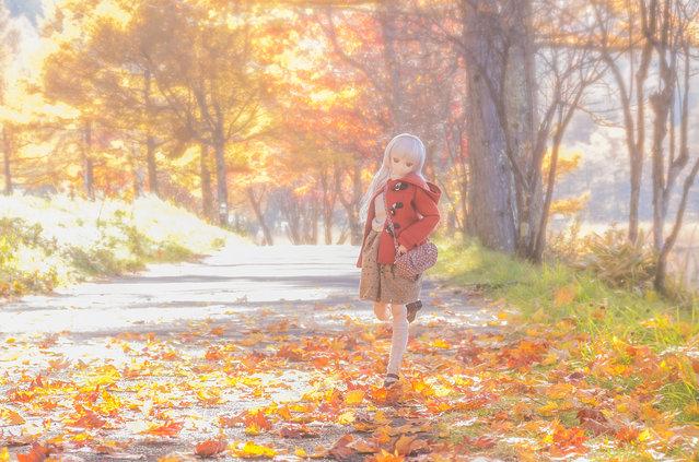 """""""Autumn walk"""". Location: Tateshina Highlands. (AZURE)"""