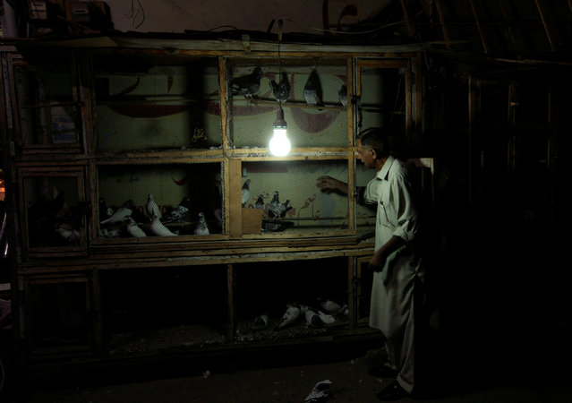 A man caches a pigeon from a cage along a roadside stall in Rawalpindi, Pakistan, October 19, 2016. (Photo by Faisal Mahmood/Reuters)