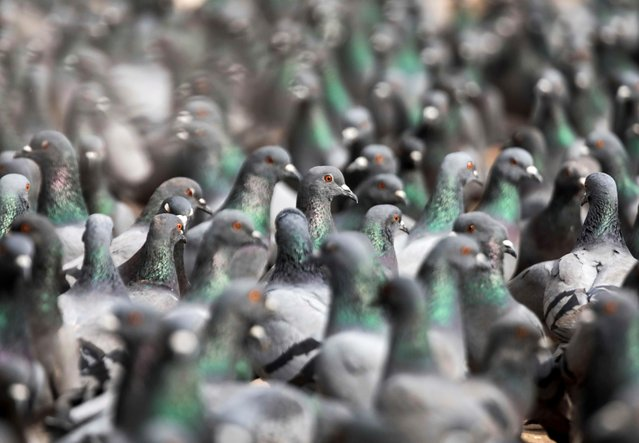A flock of pigeons rests at the premises of Boudhanath Stupa, a UNESCO's world heritage site in Kathmandu, Nepal on January 17, 2021. (Photo by Navesh Chitrakar/Reuters)