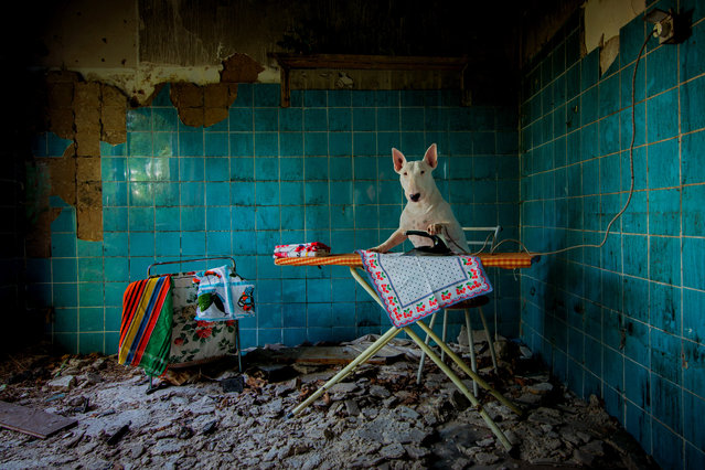 Claire ironing in an abandoned farmhouse in Netherlands. (Photo by Alice van Kempen/Caters News)