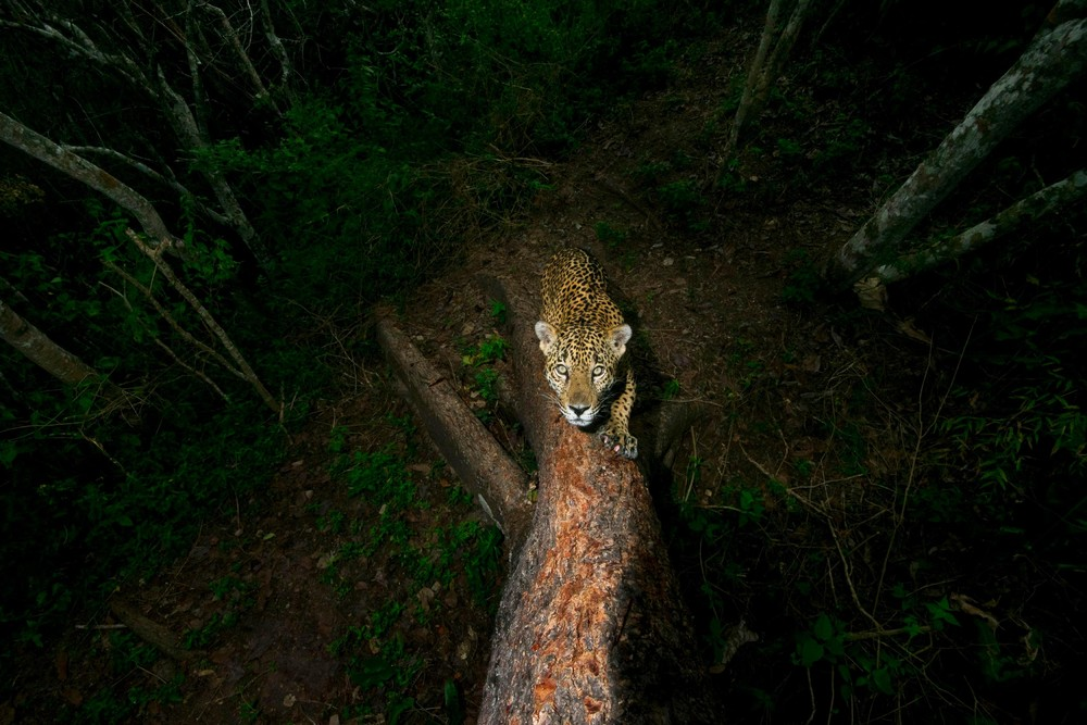 UK Wildlife Photographer of the Year 2018