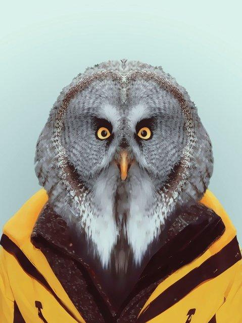 Owl wearing a winter coat. (Photo by Yago Partal/Barcroft Media)