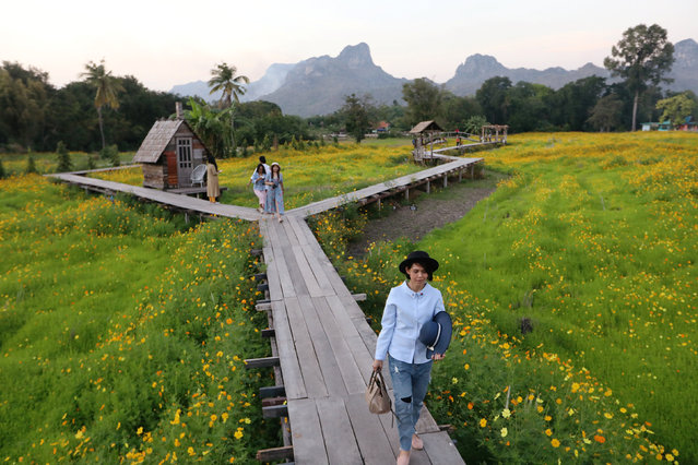 Tourists walk in a flower field in Lopburi province, Thailand on December 18, 2018. (Photo by Ann Wang/Reuters)