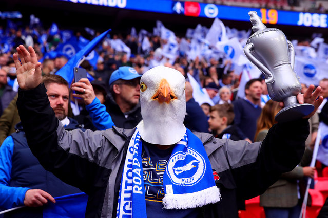A Brighton and Hove Albion fan looks on during the FA Cup Semi Final match between Manchester City and Brighton and Hove Albion at Wembley Stadium on April 06, 2019 in London, England. (Photo by Chris Brunskill/Fantasista/Getty Images)