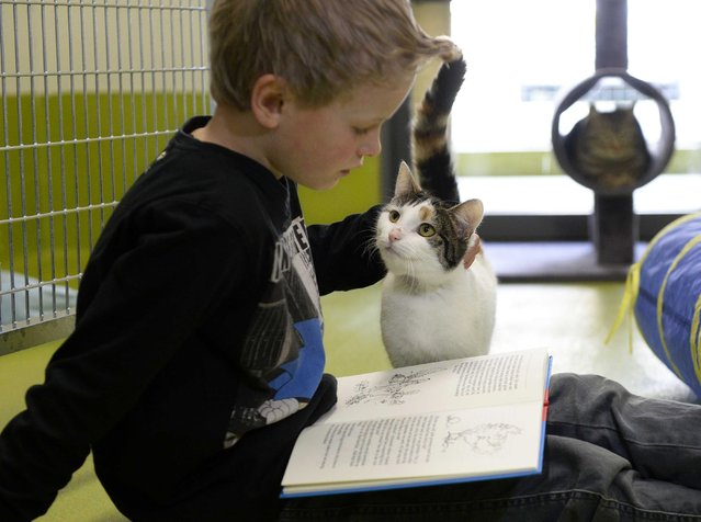 A child reads to a cat in the animal shelter in Amersfoort, The Netherlands, 26 March 2014. Both asylum cats and children benefit from the reading: the children in terms of improving their reading skills, the cats revel in hearing the sound of a voice. (Photo by Marco De Swart/EPA)