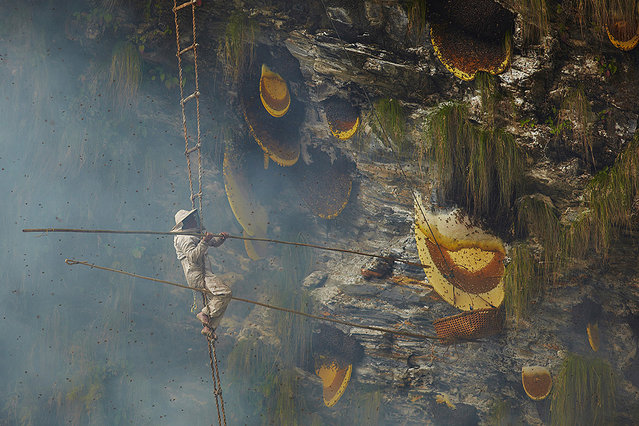 Ancient Traditional Honey Hunters Of Nepal