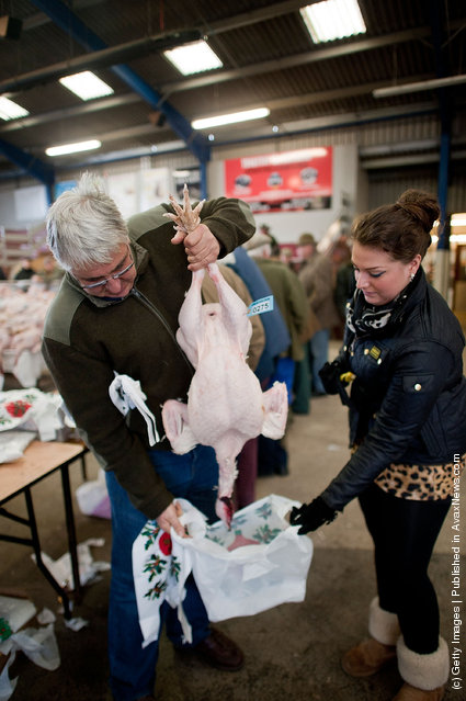 Buyers bag up their turkeys at the Christmas Poultry Auction at Murton Livestock Center on December in York, England