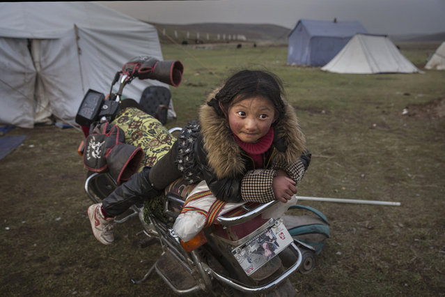 A young  Tibetan nomad girl rests on a motorcycle  at a temporary camp for picking cordycep fungus on May 22, 2016 on the Tibetan Plateau near Sershul in the Garze Tibetan Autonomous Prefecture of Sichuan province. (Photo by Kevin Frayer/Getty Images)