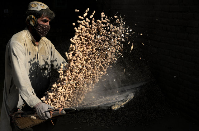 An Afghan labourer separates the loose husk from peanuts at a factory in Jalalabad on December 1, 2016. (Photo by Noorullah Shirzada/AFP Photo)