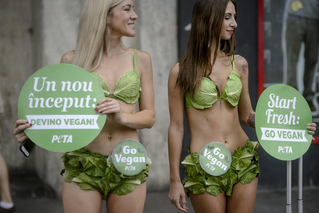 """The """"Lettuce Ladies"""", a group of PETA activists, hold signs reading in Romanian and English 'start fresh: become vegan' during an event promoting a vegan lifestyle, downtown Bucharest, Romania, Monday, August 14, 2017. (Photo by Andreea Alexandru/AP Photo)"""